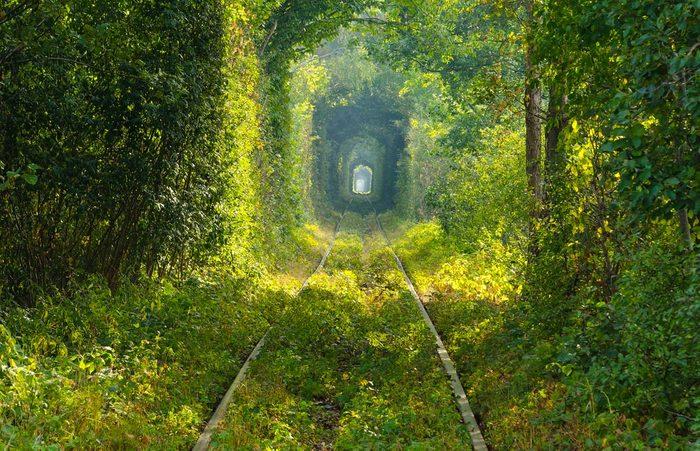 Idée de voyage : le tunnel de l'amour de Klevan en Ukraine.