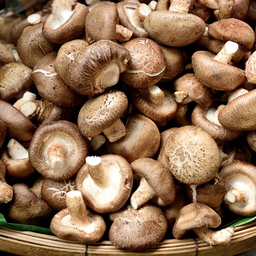 Les pieds de champignons ne doivent pas être considérées comme des déchets alimentaires.