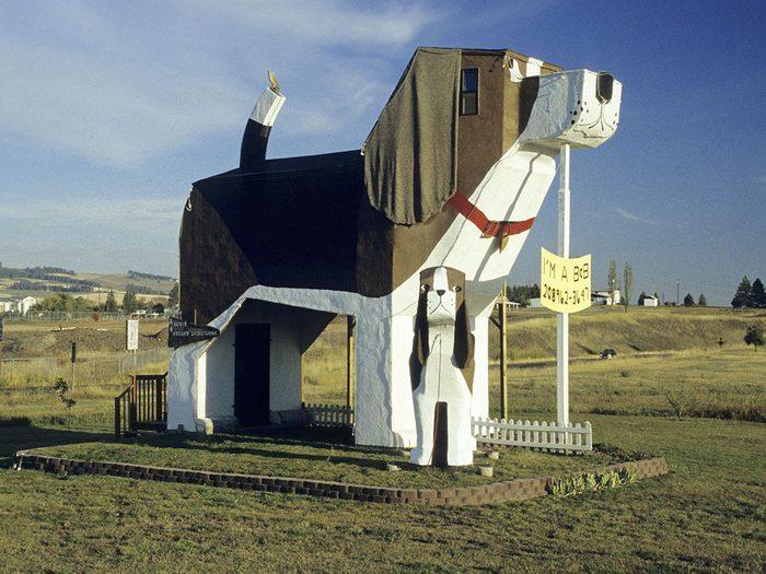 La ville américaine Cottonwood, Idaho: une maison d'hôte qui a du chien.
