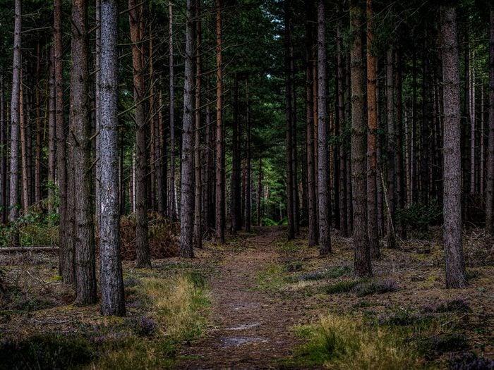 Ovni : l'incident de la forêt de Rendlesham.