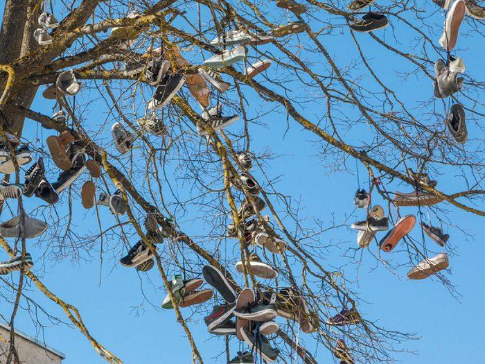 Ville américaine de Kalkaska, Michigan: les arbres à chaussures.