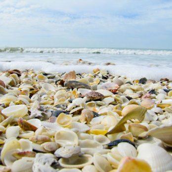 Les 15 plus belles plages de coquillages au monde