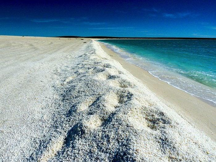 Shell Beach en Australie est une des plus belles plages du monde.