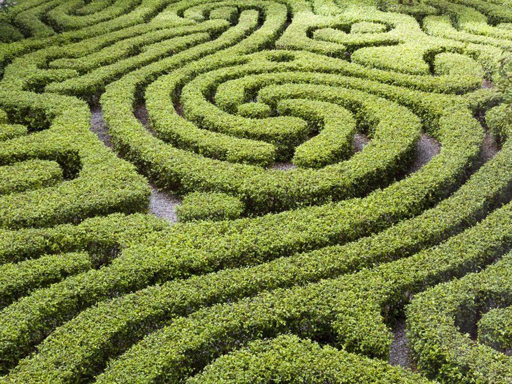 Dans la ville américaine Wahiawa, Hawaii: un labyrinthe géant en forme d'ananas.