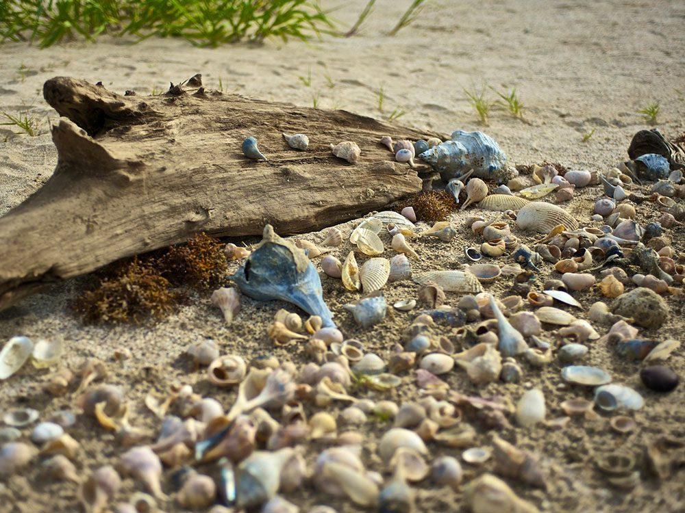 Cameron Parish en Louisiane est une des plus belles plages du monde.