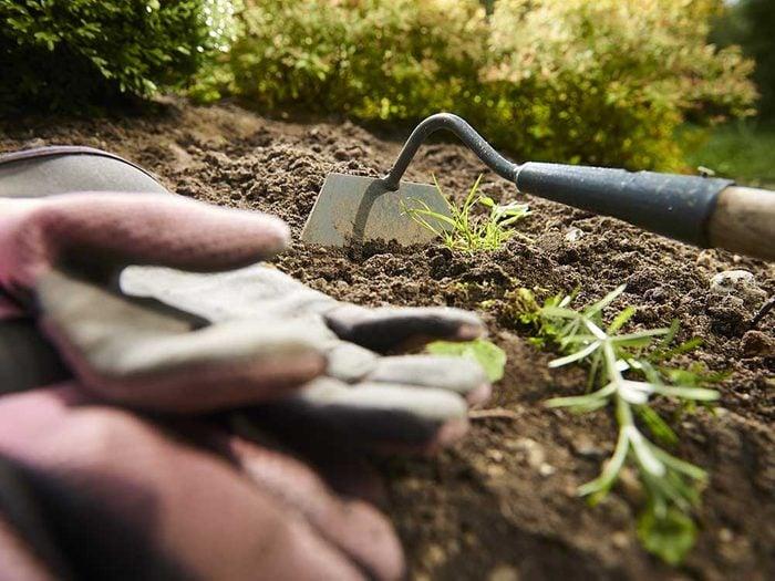 Conseils pour jardiner : le désherbage est une étape importante quand on jardine.