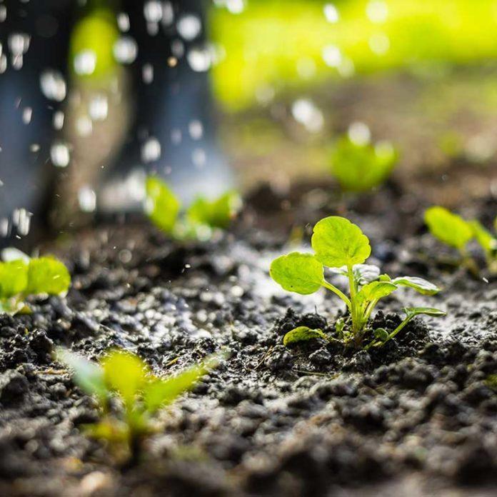 13 conseils pour jardiner