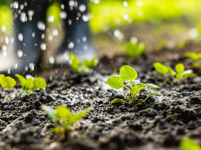 Conseils pour jardiner : le jardinage ne demande pas beaucoup d'entretien.