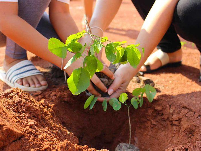 Conseils pour jardiner : il faut bien identifier le type de terre quand vous jardiner.