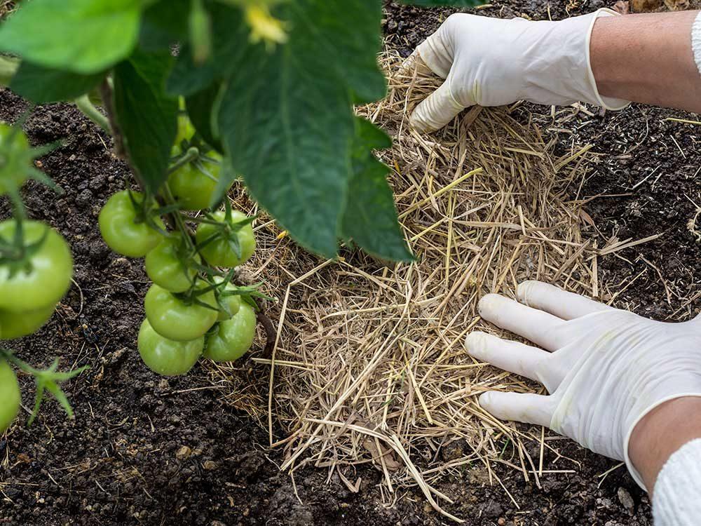 Conseils pour jardiner : pensez au paillis !