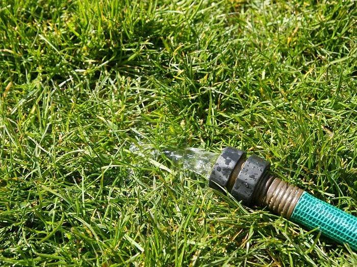 Conseils pour jardiner : les bienfaits d'un tuyau perforé.