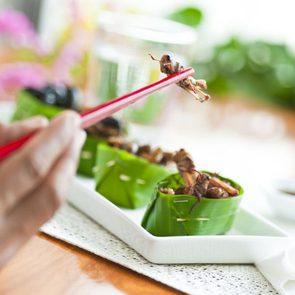 Manger des insectes est une alternative aux protéines animales.