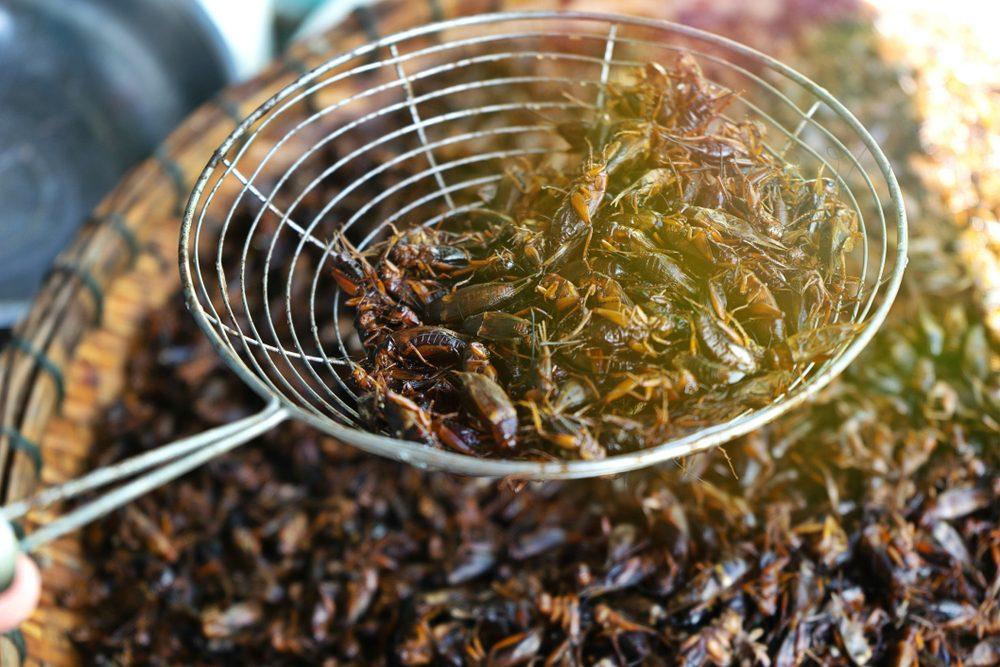 Manger des insectes frits représente un bon repas en Thaïlande.