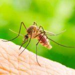 6 signes indiquant une possible allergie aux piqûres de moustique