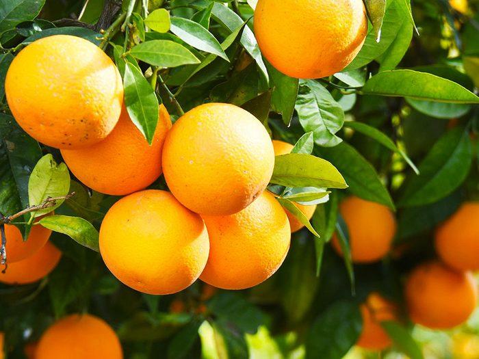 Les oranges peuvent améliorer votre transit intestinal.