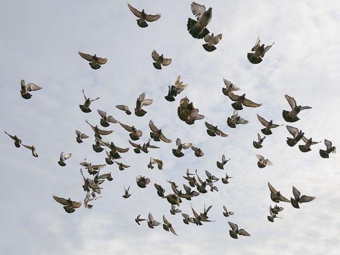 Signification des rêves : Vous voyez des oiseaux.