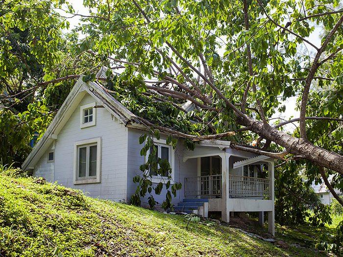Survivre à la chute d'un arbre sur votre maison