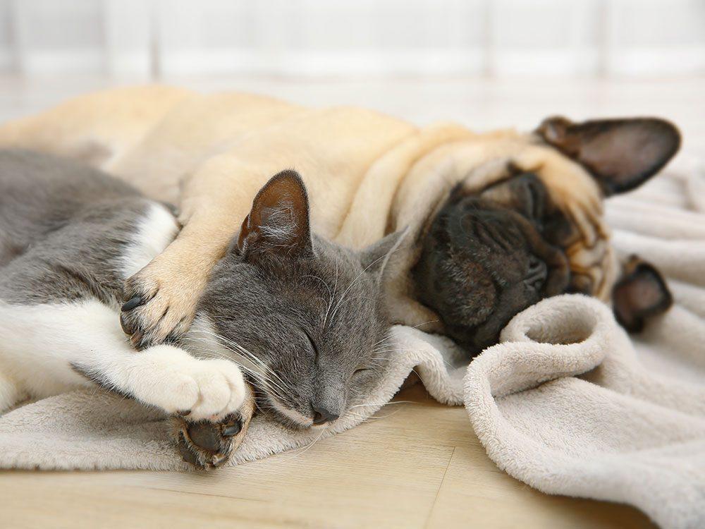 Adopter un chien qui a le même âge que vos autres animaux.