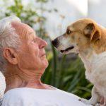14 bonnes raisons d'adopter un chien plus âgé
