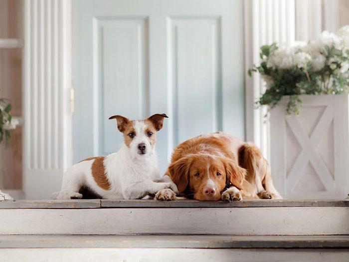 Adoption: vous avez perdu votre chien précédent trop vite.