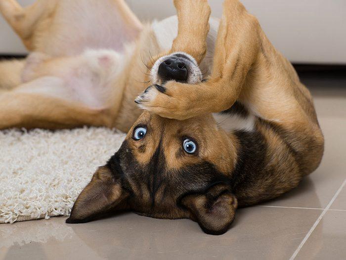 On ne connaît jamais la durée de vie exacte d'un chien même si quand on l'adopte jeune.