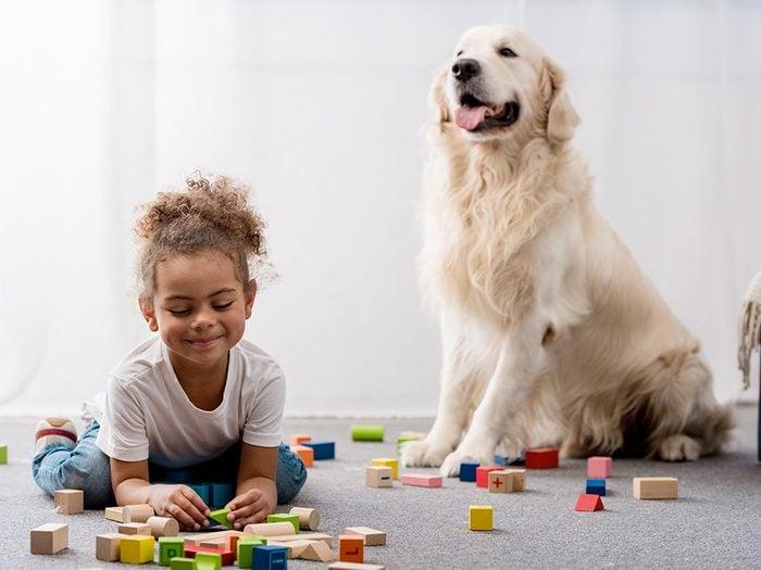 Adoption: un vieux chien peut être le type de compagnon qui vous convient.