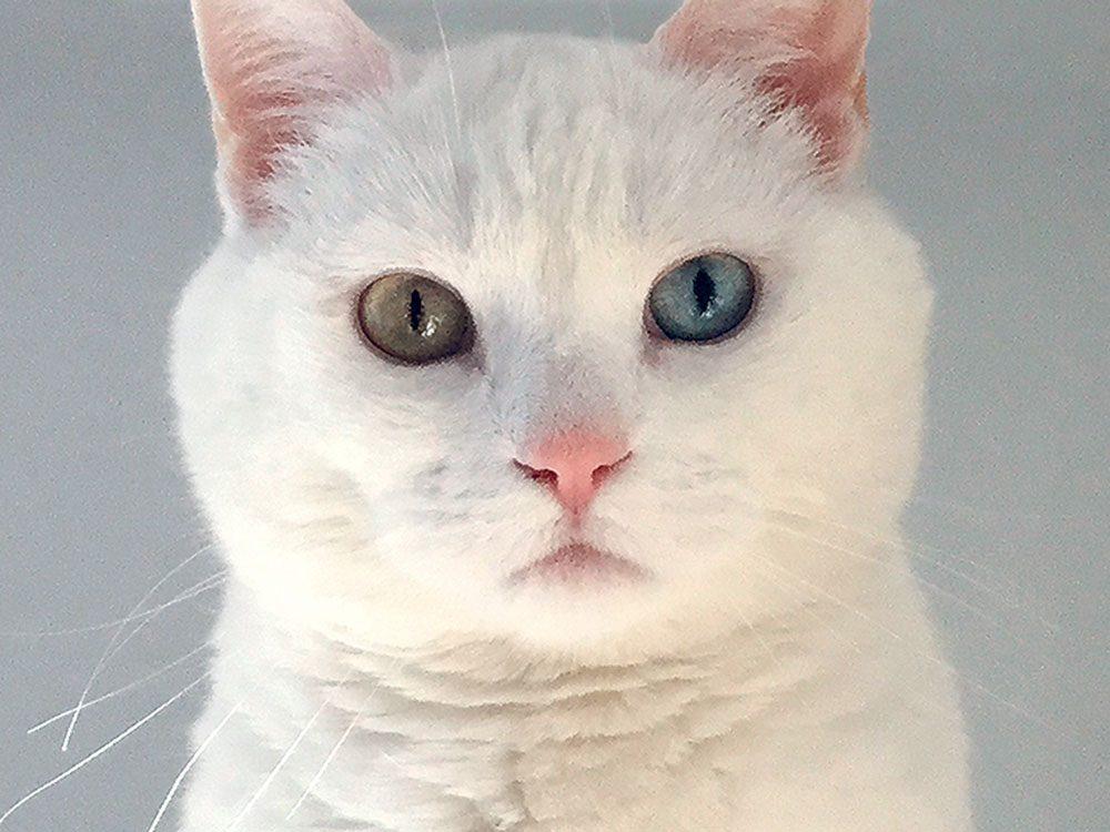 Bouboule de la Ville de Québec est l'un des finalistes finalistes de notre concours sur les animaux de compagnie 2019.