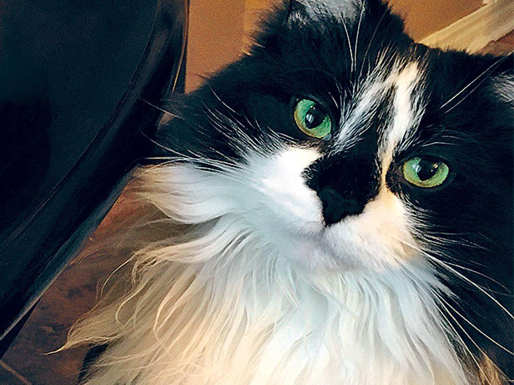 Mavis de Kingston en Ontario est l'une des finalistes de notre concours sur les animaux de compagnie 2019.