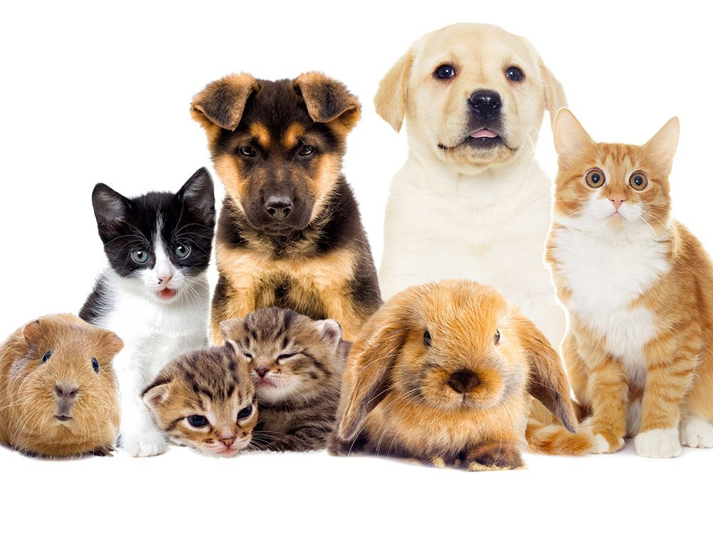 Vous envisagez de prendre une assurance pour votre animal de compagnie?