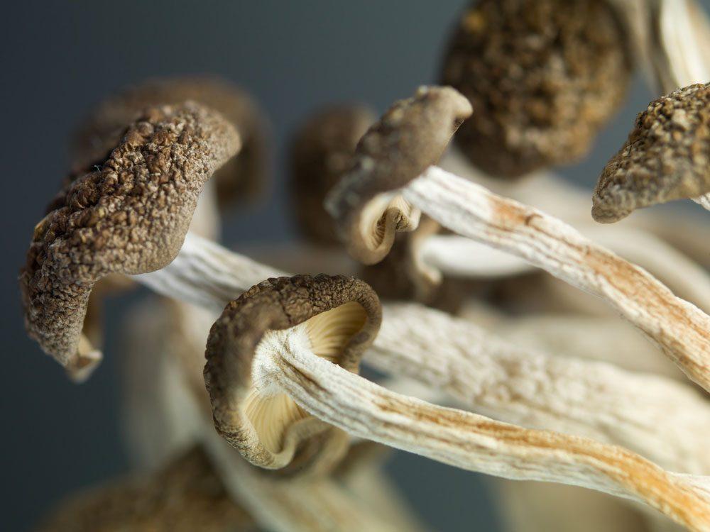 Garder les résidus alimentaires tels que les pieds des champignons.