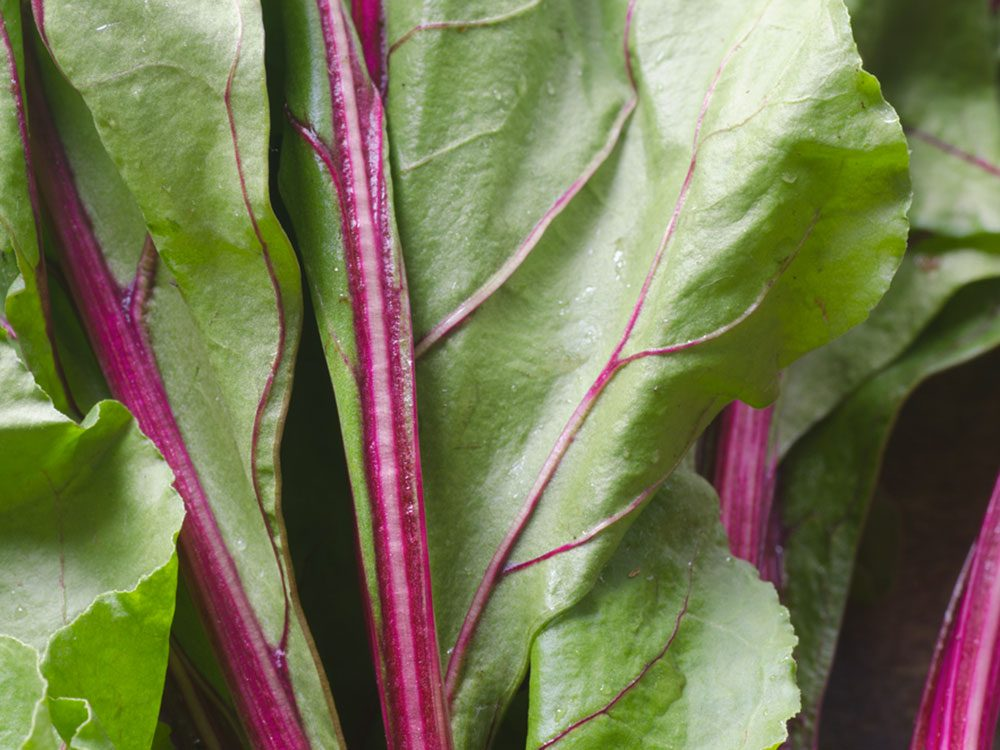 Les tiges et feuilles de betteraves font partie des résidus alimentaires que nous devrions manger.
