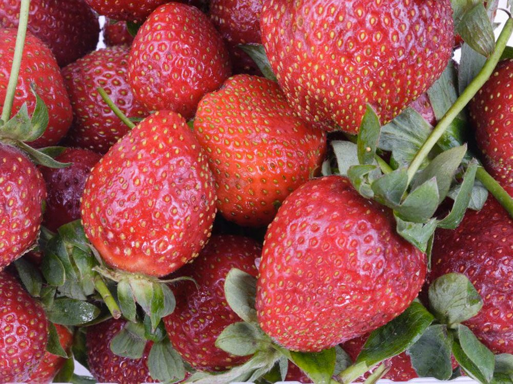 Les tiges et feuilles de fraises sont des résidus alimentaires bons à manger.