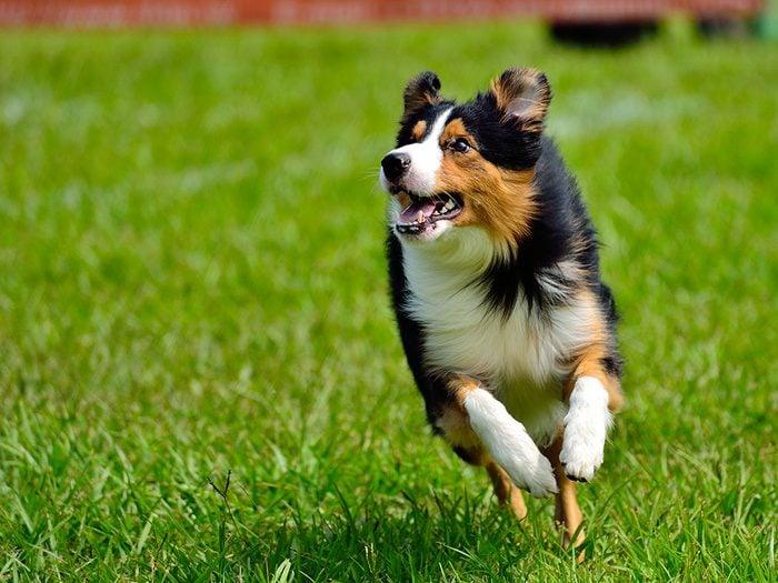 Laisser son chien se promener partout sans laisse est une mauvaise habitude que les propriétaires de chiens doivent corriger.