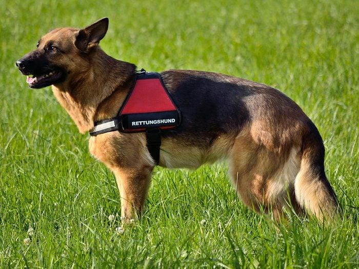 Qualifier son animal de chien «d'assistance» lorsque ce n'est pas le cas est une mauvaise habitudes que les propriétaires de chiens doivent corriger.