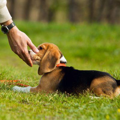 Les propriétaire de chiens ne doivent pas forcer leur chien à accepter les caresses.