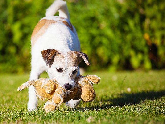Dire que son chien est gentil pour excuser un mauvais comportement mauvaise habitude que les propriétaires de chiens doivent corriger.