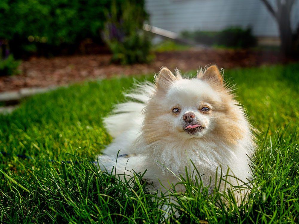 Les propriétaires de chiens ne doivent pas administrer des médicaments pour humains à leur chien.