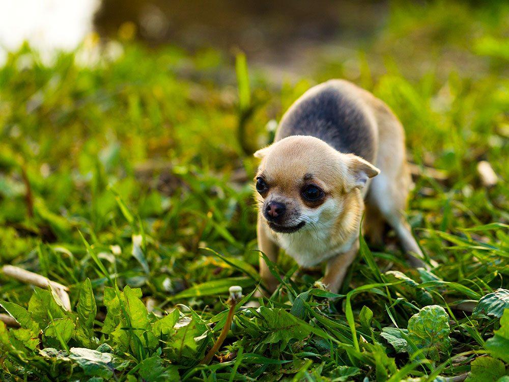 Le propriétires de chiens devraient faire attention à ce que leur chien essaie de leur dire.