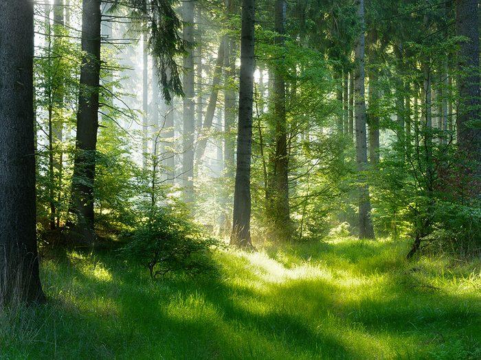 Prenez un bain de forêt pour vous relaxer.