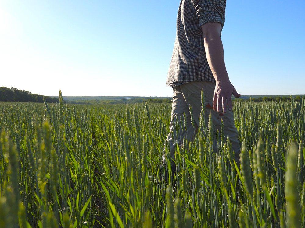 En partie à cause des changements climatiques, 1 fermier canadien sur 3 a souffert de dépression.