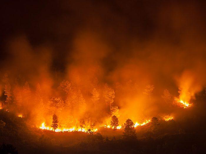À cause des changements climatiques, on compte 8000 feux de forêt par an au Canada.