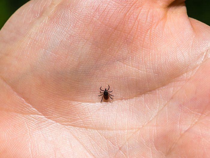 Avec les changements climatiques du Canada, les insectes porteurs de maladies peuvent survivre dans des habitats plus variés.