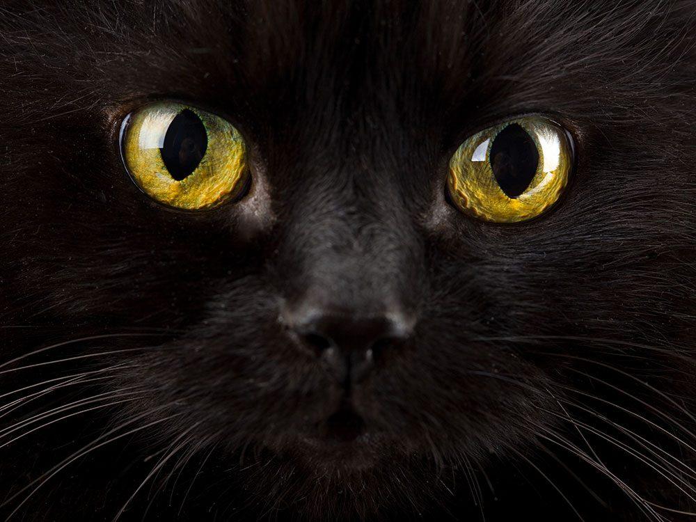 Les chats aimeraient vraiment que vous trouviez un autre animal à diaboliser.