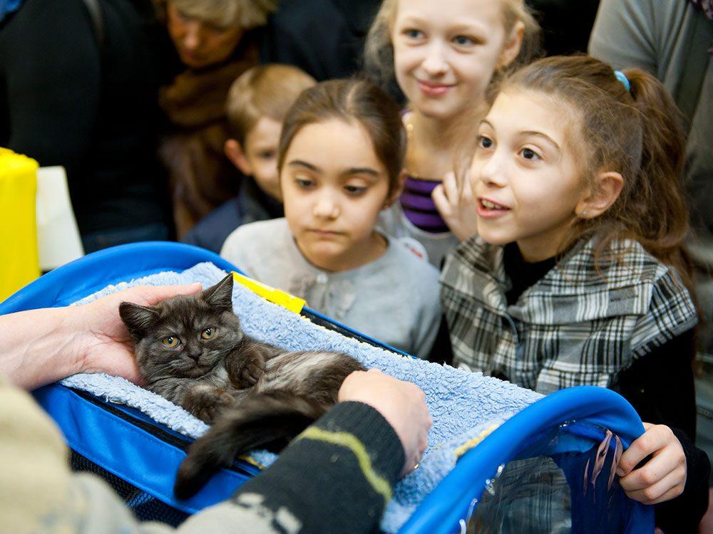 Le public vient nombreux à ces expositions félines en raison de la fascination d'internet pour ces animaux.
