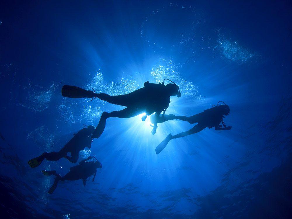 Histoire insolite: un plongeur s'est retrouvé dans la gueule d'un rorqual de Bryde.