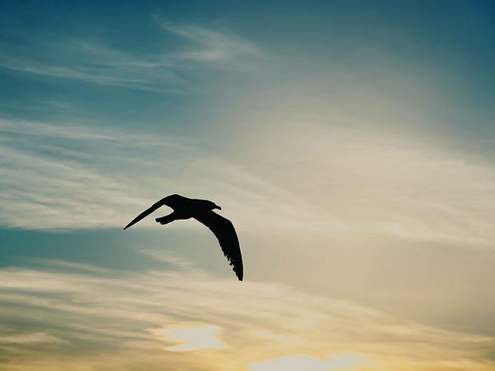 Histoire insolite: des habitants d'Aylesbury ont découvert un gros oiseau orange qui avait du mal à voler.