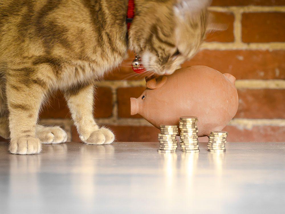 Votre vétérinaire ne tient pas compte de votre situation financière.