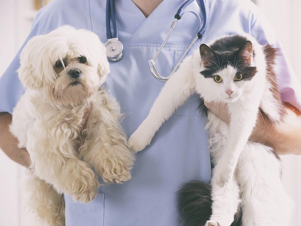 Vétérinaire.