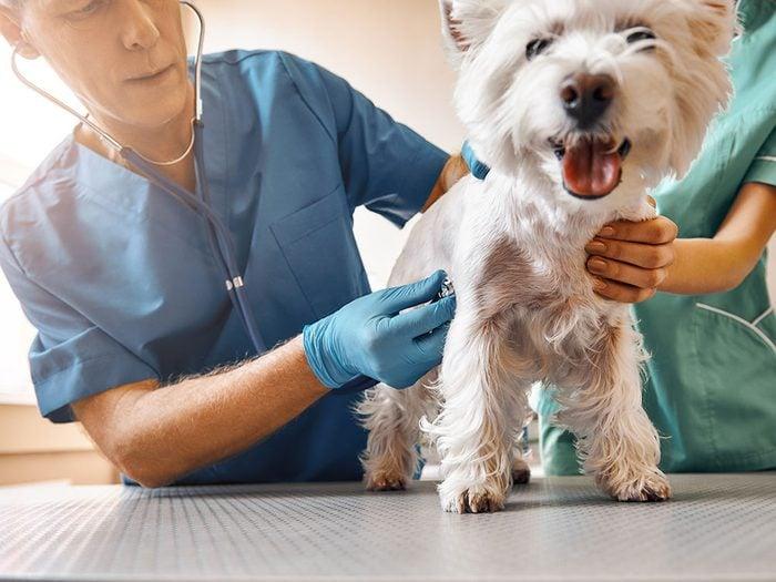 Votre vétérinaire est susceptible.