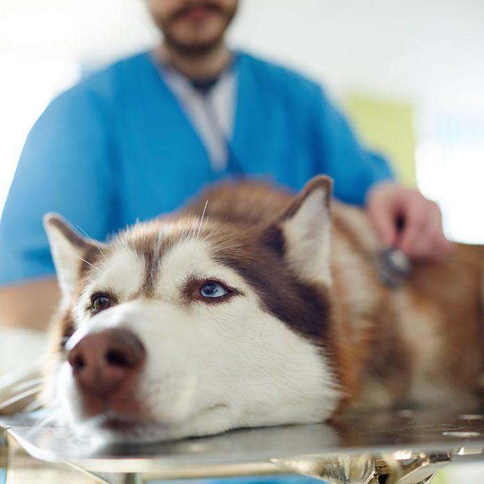 Signes que vous devez changer de vétérinaire